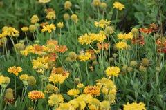 相当五颜六色的花在充分的春天开花与蝴蝶 库存照片
