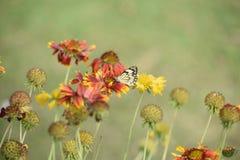 相当五颜六色的花在充分的春天开花与蝴蝶 免版税图库摄影