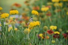 相当五颜六色的花在充分的春天开花与蝴蝶 免版税库存图片
