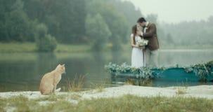 相当在有雾的河河岸的体贴亲吻蓬松的猫有吸引力的爱恋的夫妇的被弄脏的背景的 股票录像