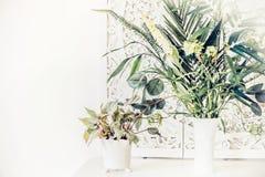 相当在白色桌,家内部上的室内植物 库存图片