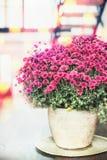 相当在花盆或花瓶的桃红色花在桌上在有窗口的,家屋子里 免版税图库摄影