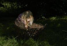 相当小白肤金发的儿童女孩在有篮子的森林 免版税库存图片