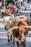相当得克萨斯价值的牛驱动Fr 库存照片