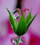 相当微小的花和小滴雨 免版税库存图片