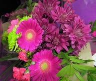 相当新鲜,明亮和有吸引力的大丁草花花束 库存照片