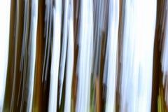 相当棕色树干和蓝天森林的背景  库存照片