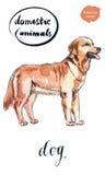 相当棕色狗 向量例证