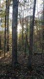 相当森林 免版税库存照片
