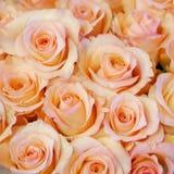 相当淡粉红的玫瑰花束 免版税库存图片