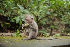相当滑稽的猴子 免版税库存图片