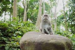 相当滑稽的猴子 库存图片