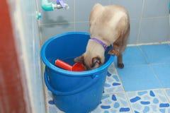 眉头猫吃水 免版税库存图片