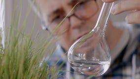 看一个玻璃烧瓶的内容的有清楚的液体的人科学家的特写镜头在增长的绿草旁边 股票视频