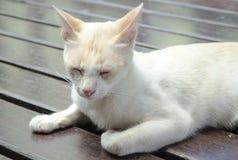 看一只白色的猫认为或,但是它` s可能有睡觉 库存照片