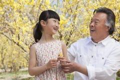 看一朵花的微笑的女孩和她的祖父在公园春天 库存照片