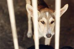 看与不快乐的眼睛和大耳朵的哀伤的狗在风雨棚笼子, 图库摄影