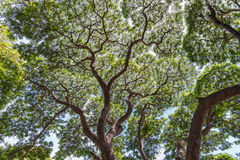 看与叶子的高细节的树 库存照片