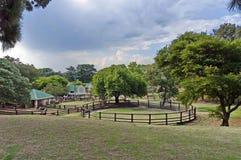 看与牛笔的领域在动物园里 免版税库存照片