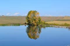 水看了白杨树 库存图片