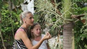 看分支植物的母亲和女儿 影视素材