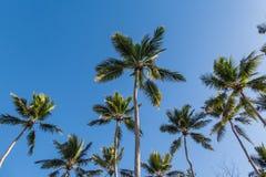 看反对蓝色晴朗的天空的热带棕榈树 免版税库存照片