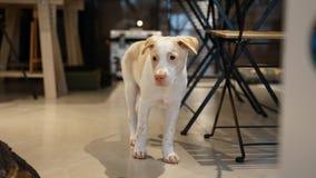 看另一边的小狗 免版税库存照片