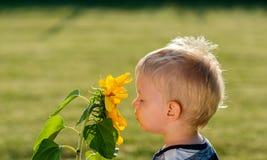 看向日葵的一个岁男婴 免版税库存照片