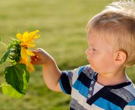 看向日葵的一个岁男婴 免版税库存图片