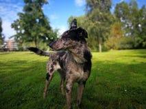 看在公园夏天的狗外形 免版税库存照片