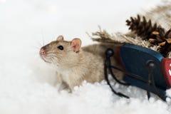 看在圣诞节装饰爬犁外面的滑稽的鼠 免版税库存照片