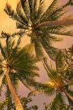 看在日落的可可椰子 免版税库存照片