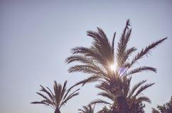 看在日落的棕榈树 免版税库存图片