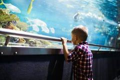 看在有热带鱼的水族馆的严肃的男孩 免版税库存照片