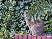 看在植物后的猫 图库摄影