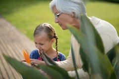 看在植物的孙女和祖母一朵黄色花 免版税库存照片