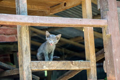 看在照相机的灰色小猫 免版税库存照片