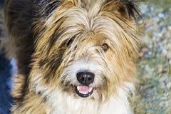 看在照相机的狗的画象 免版税库存照片