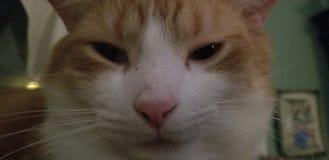 看在照相机的猫 免版税库存照片