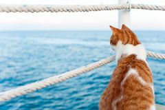 看在码头的逗人喜爱的红色猫去开会海边 库存图片