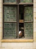 看在窗口外面的一匹马 图库摄影
