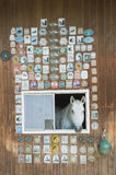 看在窗口外面的马画象 免版税库存图片