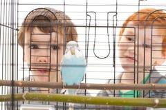 看在笼子的男孩孩子宠物鹦哥 免版税图库摄影
