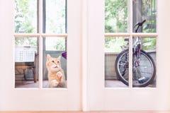 看在议院窗口的橙色猫从外面 免版税图库摄影