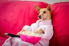 看在长沙发的狗电视 库存照片