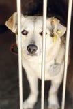 看在风雨棚笼子, sa的白色逗人喜爱的小狗的哀伤的看的眼睛 免版税库存图片