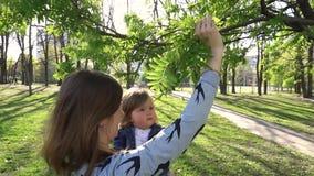 看大树的婴孩在公园 股票视频
