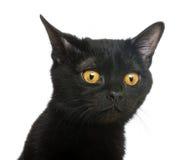 看孟买的小猫的特写镜头  库存照片