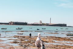 看对一个人的海鸥在卡迪士在安大路西亚,西班牙 库存照片