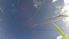 看对云彩和蓝天 免版税图库摄影